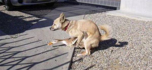 собака с уткой