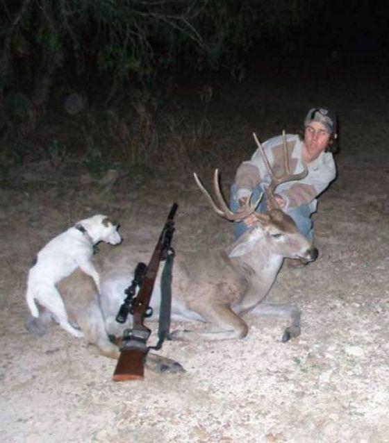 собака с оленем на охоте
