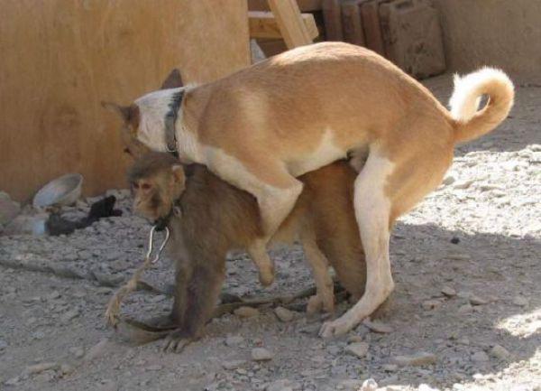 собака с макакой