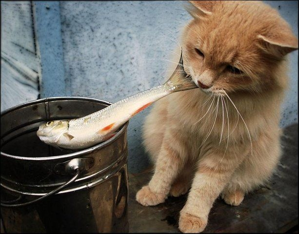 котэ ловит рыбу