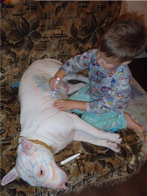 изрисовала собаку
