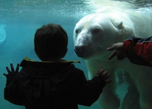 пожелания от медведя