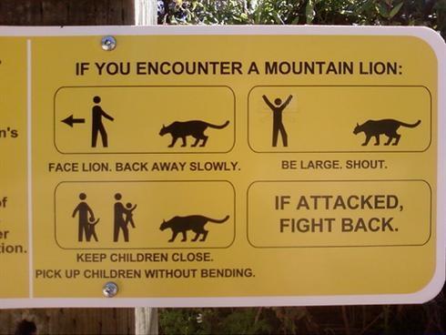 опасность льва