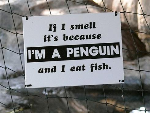 я пингвин и я воняю