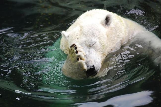 медведь убит горем