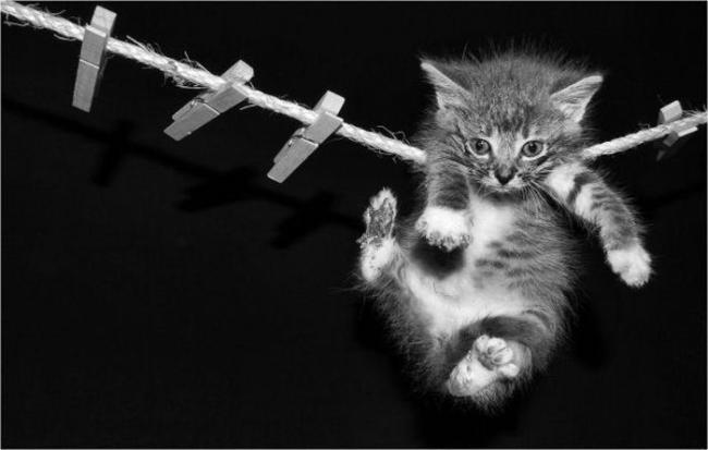 кот сушится на верёвке
