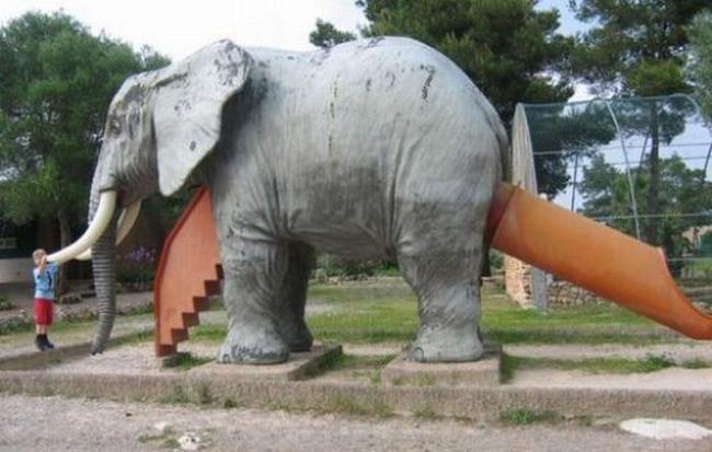 задний проход слона