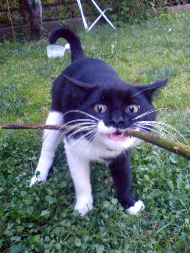 сумасшедший кот