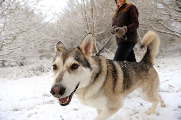 Почему собаки добрее чем люди