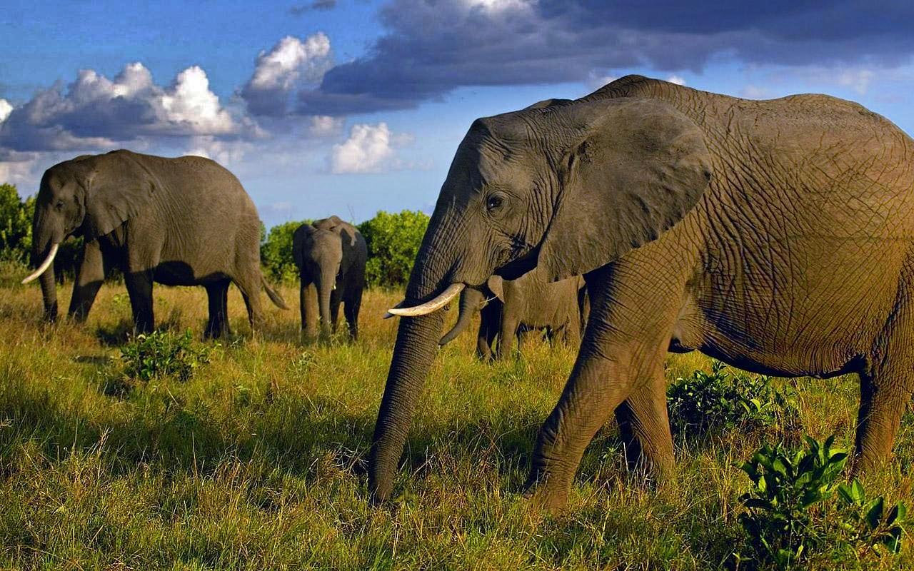 Кладбище слонов