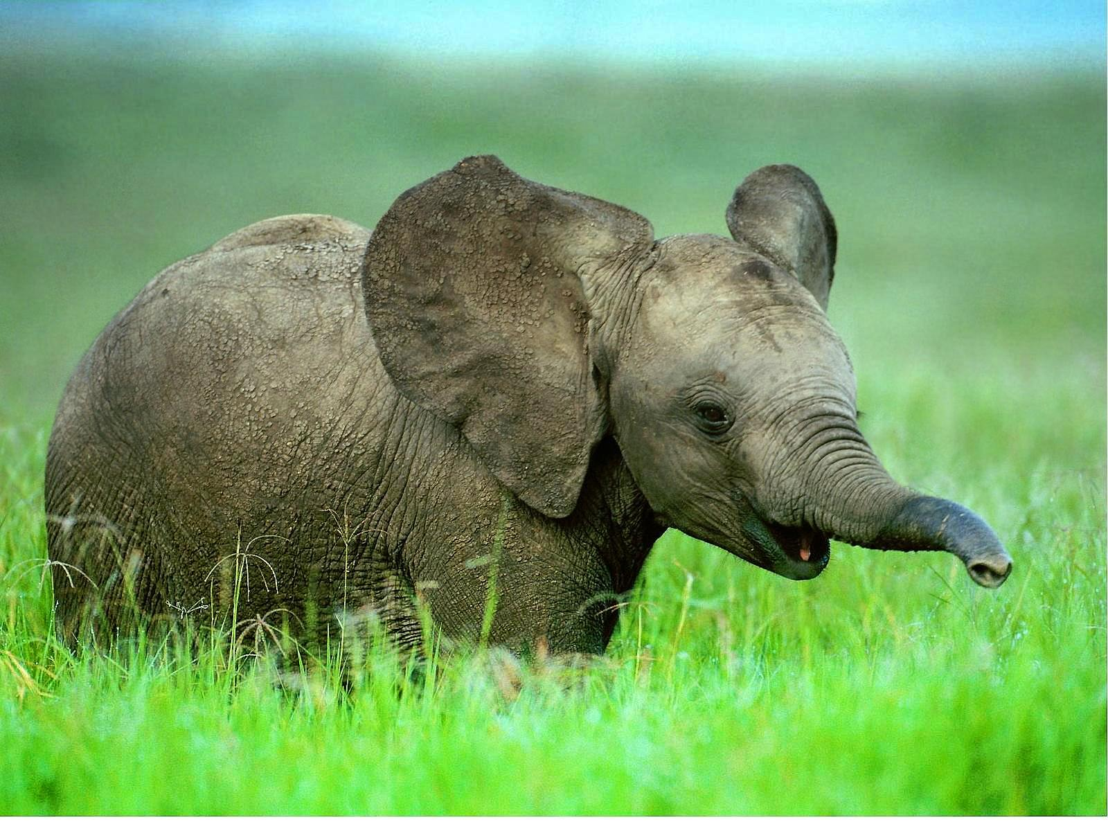 слоники-тысячнеги