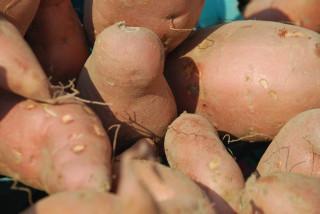 картошка картофель