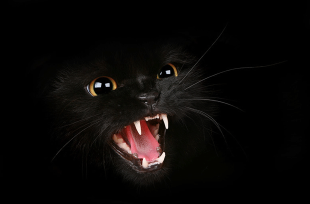 чёрный кот блоггер