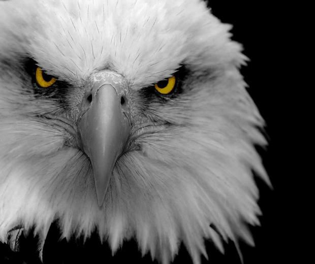 взгляд орла фото блогер eagle