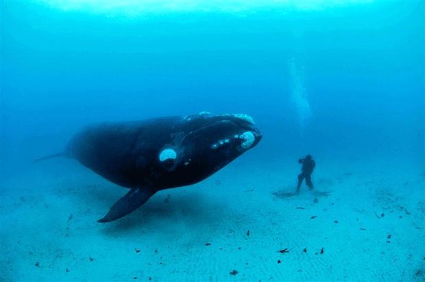 кит блогер фото big whale