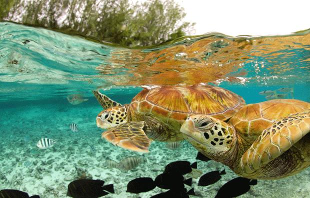 черепахи блогеры фото turtles