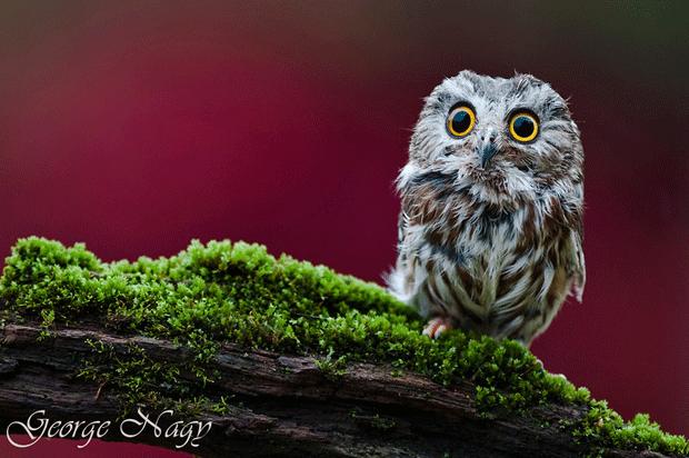 диктй филин блогер фото owl