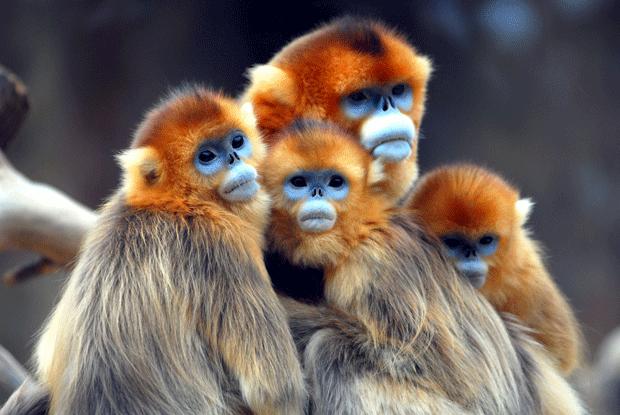 обезьяны блоггеры фото monkeys