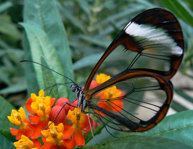 бабочка насекомое блогер фото insect butterfly
