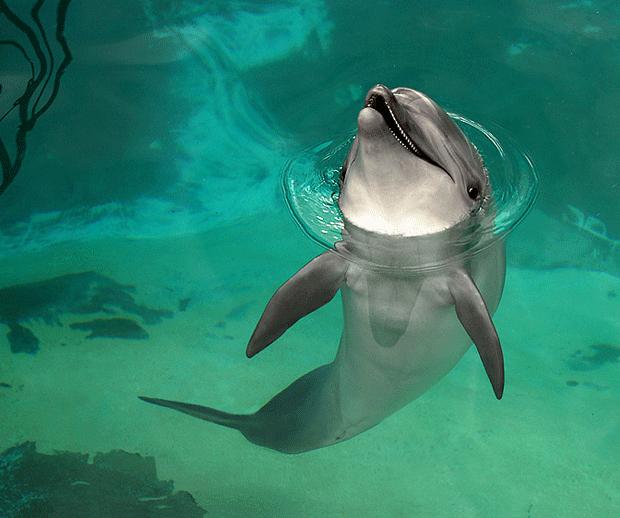 дельфин блогер фото dolphine