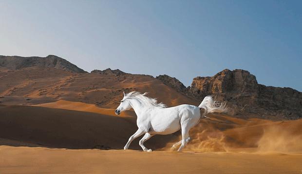 белый конь лошадь блоггер фото horse