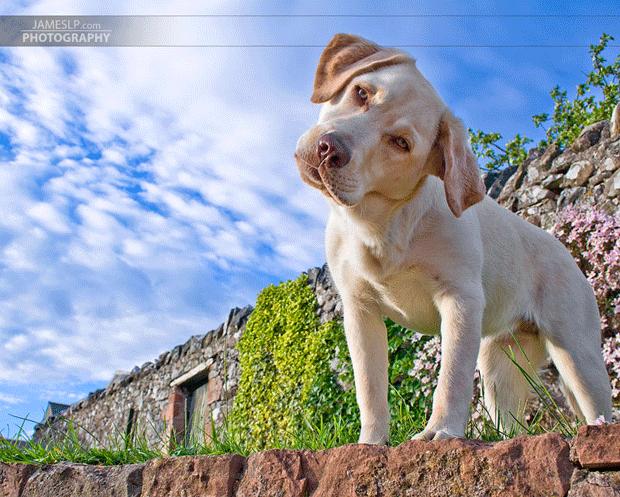 собако выпей йаду хочень блоггеры фото doggy