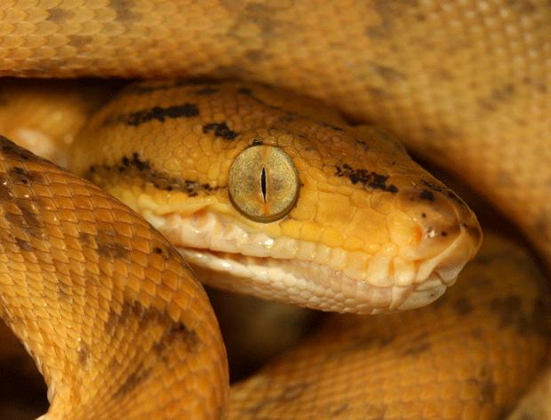 желтая змея блогер фото snake