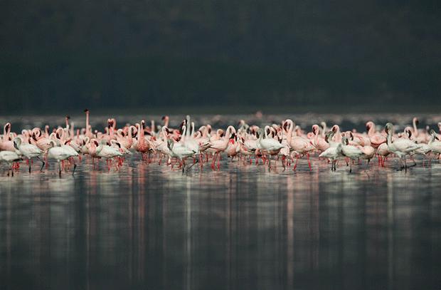 птицы блогеры фото wildlife
