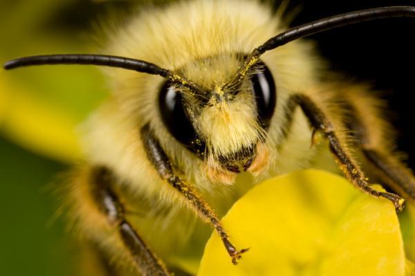 Пчёлы Медовый заговор