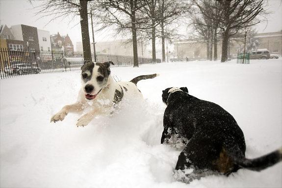 Собаки Джози и Рокси