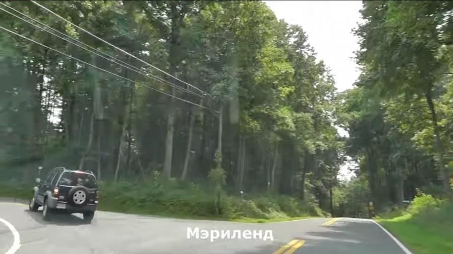 Обняв дерево вставили в попу фото 162-589