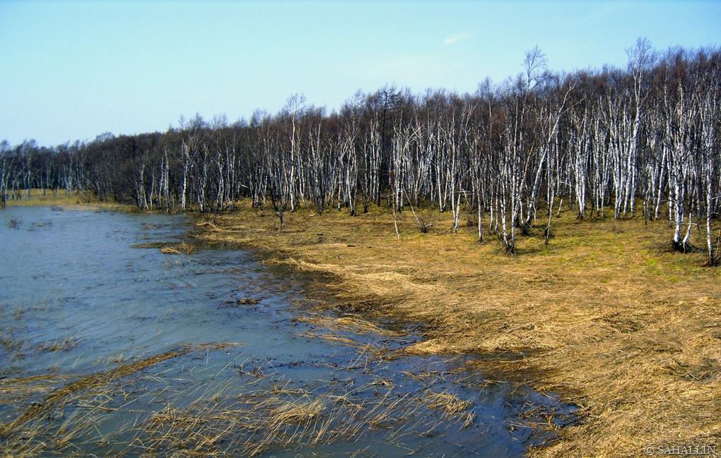 фишек, сахалинская весна фото нивелиры