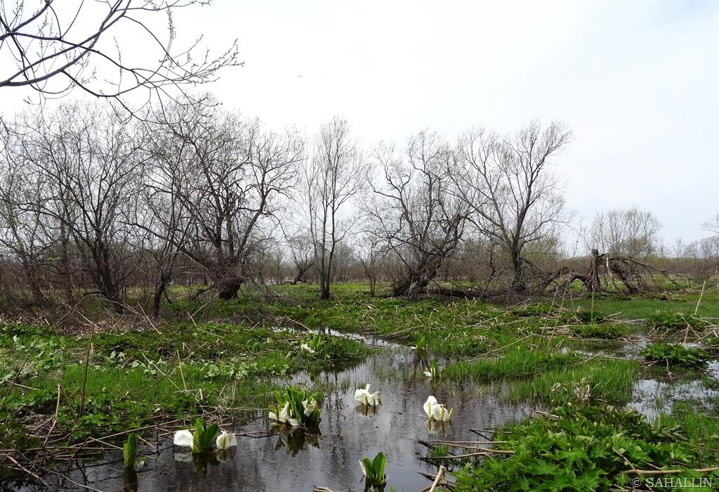 договорах сахалинская весна фото привод