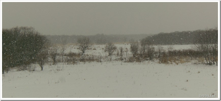 снегопад.сахалин