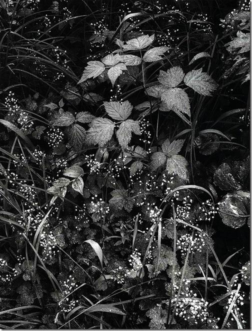 trailside  Ansel Adams,photo,sahallin,Ансел Адамс,фото