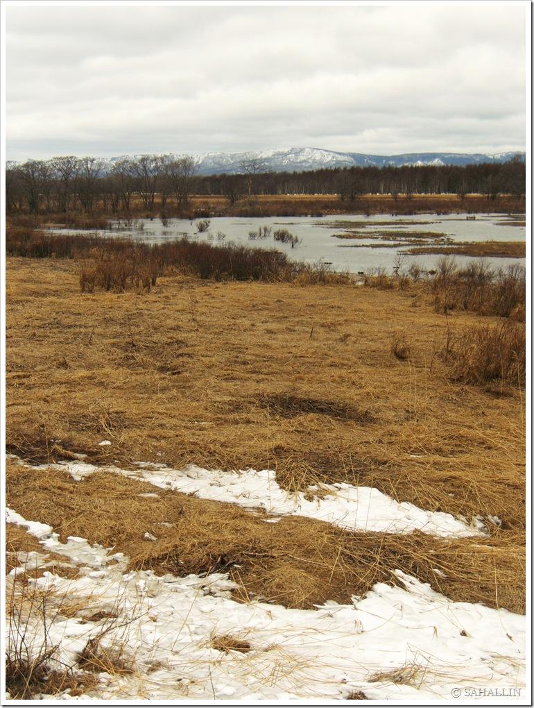 фото,сахалин,природа,весна,photo,sakhalin,sahallin