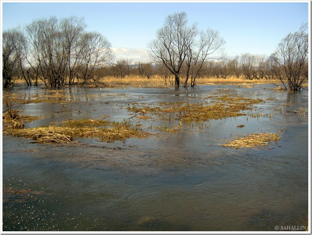 фото,сахалин,весна,река,разлив,природа,sakhalin