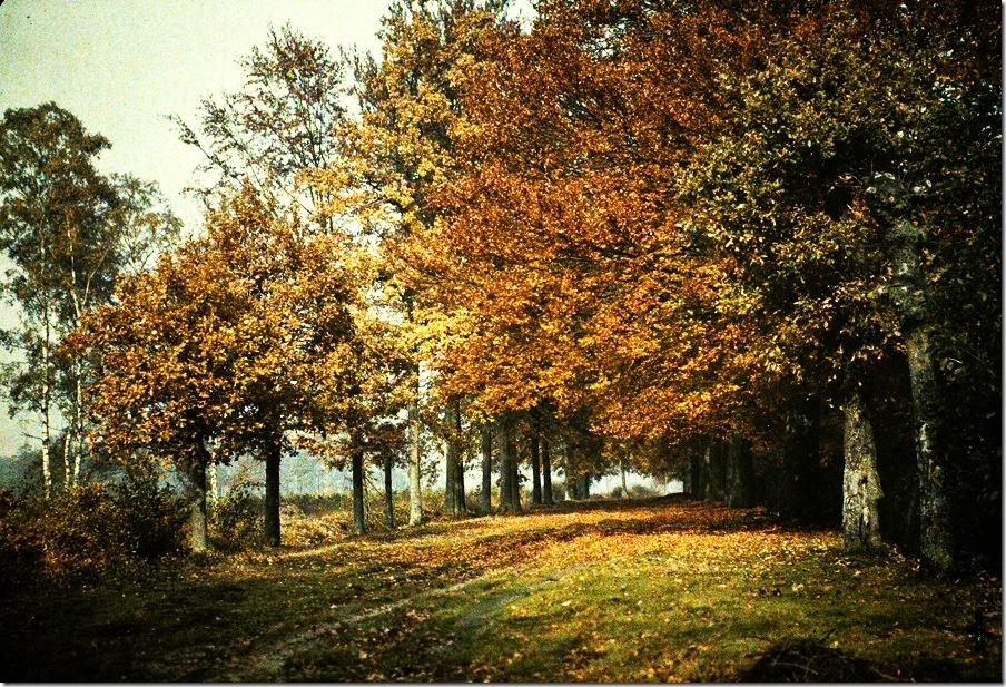 Remi Verstreken, Forest edge. 's-Gravenwezel Belgium 1913