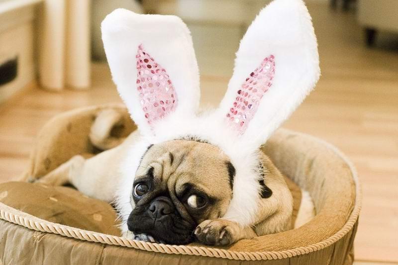 Собаки и зайцы.