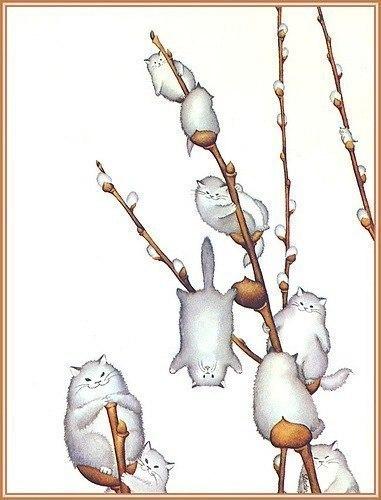 Вербовi котики