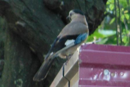 Птичка6