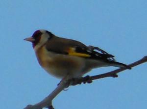 птичка2