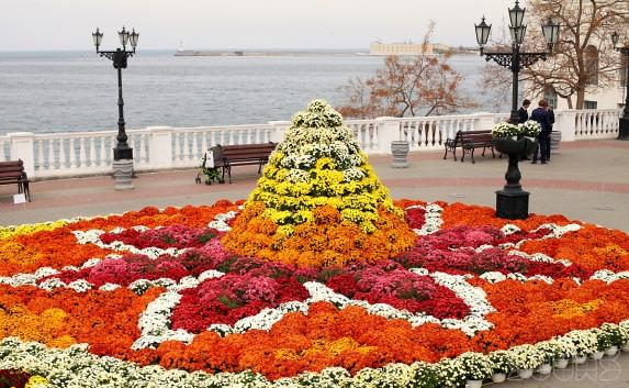 mums_flowers