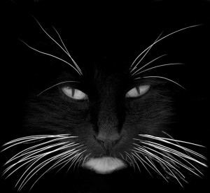 black_cat_white_whiskers1
