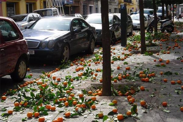 Апельсины в Севилье