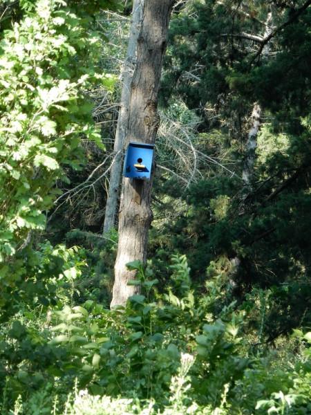 Птичья Почта