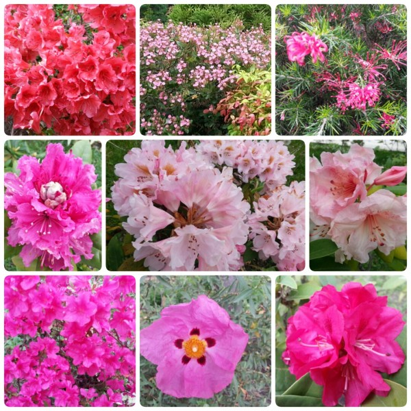 Красное и розовое