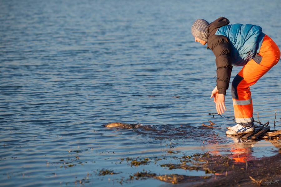 ловить сетями рыбу сонник