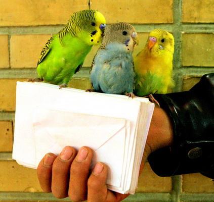 Попугаи: «Ну, кто следующий будет тянуть?» :)