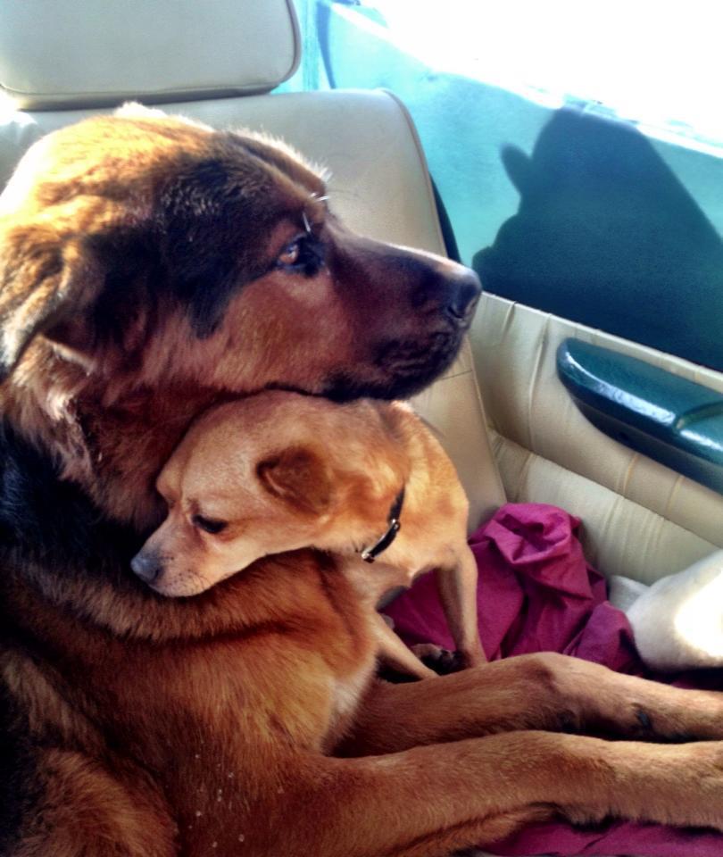 tiberius and jaeger hug